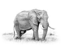 Black And White Wildlife Art Elephant by Diana Van Tankeren : Black And White Wildlife Art Print, Featuring A Walking Elephant. Photography combined with digital painting and blending techniques for an artistic look Black White Wildlife Diana, Hotel Room Decoration, Elephant Wall Art, Image Categories, Wildlife Art, Canvas Art Prints, Fine Art America, Digital Art, Poster