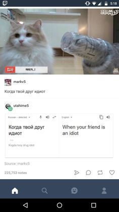 Me and my best friend Kaya (I'm the one with a cup stuck on her head) - - Memes - Kitty kit Cute Funny Animals, Funny Cute, The Funny, Cute Cats, Hilarious, Dc Memes, Funny Memes, Jokes, Russian Cat