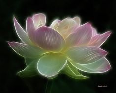 Lotus Fractal | lotus-fractal-stephen-johnson.jpg