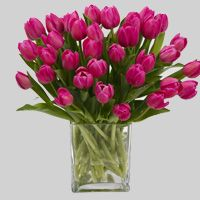 I have a thing for pink tulips!