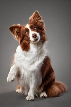 Craziest Dogs Photography