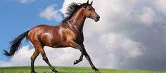 El animal más bello del mundo no es el más bonito, sino cualquiera que corra libre.  Rafel Àngel Jaume  Compártelo si estás de acuerdo.