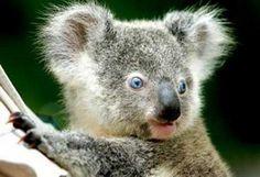 Картинки по запросу австралия природа животный мир