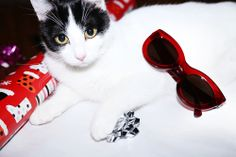 How about a cat, or just to be safe stick with cat eye sunnies LOL #nordstrom