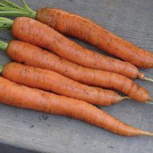 WestCoastSeeds: Napoli Carrots