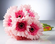 Gerbra daisies