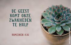De Geest komt onze zwakheden te hulp. Romeinen 8:26  #Geest, #HeiligeGeest, #Zwak  https://www.dagelijksebroodkruimels.nl/romeinen-8-26/