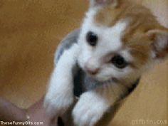 Cat A Little Piece of Universe