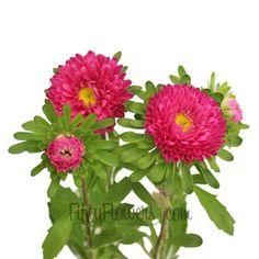 FiftyFlowers.com - Hot Pink Matsumoto Flowers