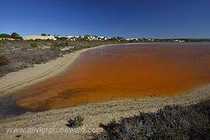 les eaux salées du lac McDonald en Australie du sud / by Olivier Grunewald