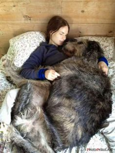 See more Top 10 Most Lovable Dogs in the World