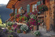 Das Blumen Haus - Bild & Foto von Goldhase aus Kt. Graubünden - Fotografie (29190195) | fotocommunity