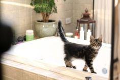 Kitten On Tub by idaost