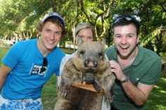 Wombats are crazy cute!!!!! Animal encounters at Steve Irwin Zoo.