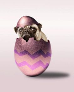 Easter pug    Like, repin, share! :)