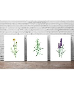Herbs Set of 3 Art Prints, Camomile Wall Decor, Rosemary Watercolor Painting, Purple Lavender Home Garden, Foodart Wall Hanging by ColorWatercolor on Etsy https://www.etsy.com/listing/250567253/herbs-set-of-3-art-prints-camomile-wall