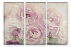 Pink Blossom Canvas (664847X53)   £90