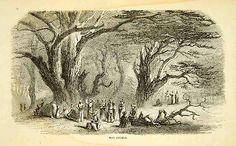 1858 Wood Engraving Art Cedrus Iilbani Cedar Tree God Forest Lebanon Middle East | eBay