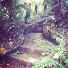 Very Edna Walling Garden Steps, Garden Paths, Landscape Design, Garden Design, Australian Painters, Australian Garden, Stone Walls, Growing Plants, Dream Garden