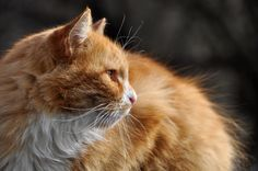 10 Signs Of Cancer In Cats  http://iheartcats.com/10-signs-of-cancer-in-cats/