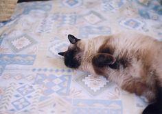 birthday girl by +akane+, via Flickr