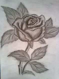 rose: I just love to draw, it makes me happy.