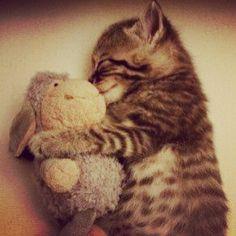 #Cats #Cat #Kittens #Kitten #Kitty #Pets #Pet #Meow #Moe #CuteCats #CuteCat #CuteKittens #CuteKitten #MeowMoe Retweet if this made you say awww.. ... https://www.meowmoe.com/42805/