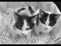 KITTENS - YouTube Kittens, Cats, The Creator, Youtube, Action, Animals, Cute Kittens, Gatos, Animales