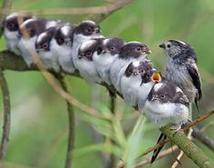 These Mother Birds Protect Their Young in the Cutest of Ways...