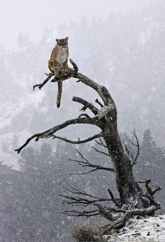 Just a cat on a tree.