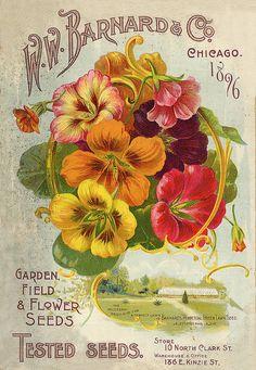 Barnard 1896, vintage flower catalog
