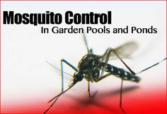 Call @ 99997875871. Stop the entrance of dengue like diseases into your home & offices. Get mosquito control of Mourier pest control and eradicate your problem immediately. Call us now.
