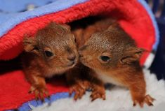Image result for bed squirrel