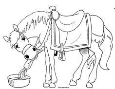 Americo HET paard van sinterklaas