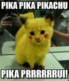 Gato zuado meme (http://www.memegen.de/meme/io8tiw)