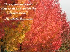 Take time to watch the leaves turn!