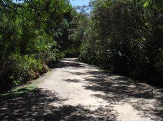 Estrada argentina, Parque Natural y Reserva Ecológica Costanera Sur, Buenos Aires.