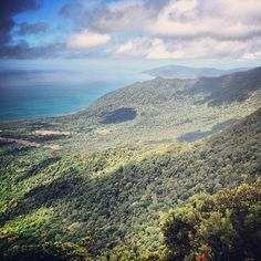 Some of our favourite #instgram photos from Cape Tribulation, Daintree National Park and Far North Queensland