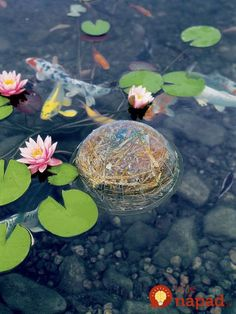 Keep the water in your container water garden, small pond or aquarium clean and clear the natural way — with barley straw. Indoor Water Garden, Backyard Water Feature, Ponds Backyard, Outdoor Ponds, Garden Supplies, Garden Tools, Fresco, Pond Cleaning, Container Water Gardens