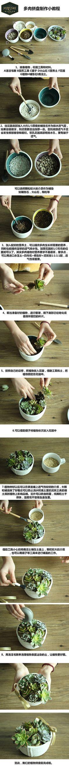 胤妆采集到【植物·培育】