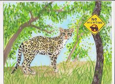 Endangered Species Day art contest 6-8 grade category semi-finalist: Anna Qian, Age 14, Ocelot