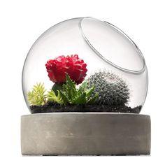 terrarium W/ Concrte Basehome & Co
