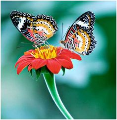 Image Detail for - picture of Butterflies with flowers