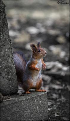 llbwwb:   Liberty of Squirrel by Teemu Kustila