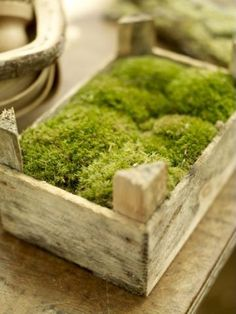 garden moss in a clementine crate. love love love this super simple recycled idea