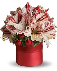 Sweeter than a candy cane, this gift is sure to delight. It's amaryllis, the traditional Christmas flower with a beautiful twist. Big, red and white blossoms are arranged with shiny ornament balls and red organza ribbon in a satiny container. Christmas Flower Arrangements, Vase Arrangements, Christmas Centerpieces, Christmas Plants, Christmas Flowers, Christmas Decor, Merry Christmas, Holiday Decor, Exotic Flowers