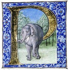 Douce Pliny - Florentine Venice 1476-9