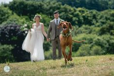Picture-of-the-day. Bride & groom walking up the field at trenderway in Cornwall. Their Hungarian Vizla is running ahead. Wedding Blog, Wedding Events, Running Ahead, Green Leather Jackets, Young Farmers, Devon And Cornwall, Image Of The Day, Bridal Boutique, New Friends