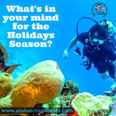 Here is an idea for your Holidays. #scubadiving #bluehole #ambergriscaye #padi #vacation #scubaschoolbelize #belize #thegreatbluehole #caribbean