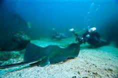 diving at Coiba - Panama www.visitpanama.com